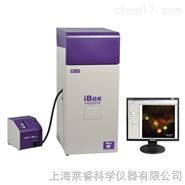 UVP显微活体成像系统iBox Explorer