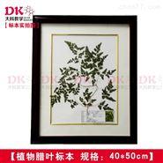 中药腊叶标本 植物标本 教学展览展示
