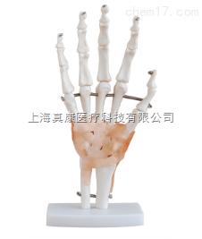 自然大手关节模型带韧带