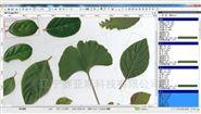 植物根+叶图像分析仪系统(高拍仪版)