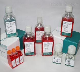 SV40转化人肝上皮细胞/THLE-3现货科研专用