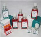 猪小肠上皮细胞/ZYM-DIEC02 现货科研专用