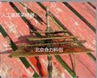人工基质采样器 底栖生物附着挂板