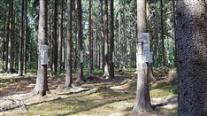 树木生理生态系统
