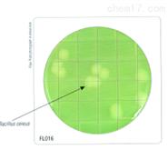 HiTouch™ 芽孢杆菌计数平板