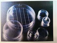BD Falcon™细胞培养皿