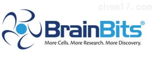 BrainBits代理