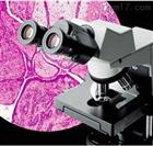 奥林巴斯偏光显微镜