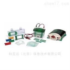 1658025 小型垂直電泳系統套裝 BIO-RAD