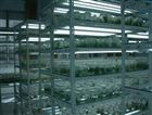 生产植物组培设备,组织培养架
