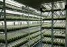 植物组培架  光照培养架 育苗生长架