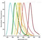SEEBRIGHT™ 系列修饰核苷酸-缺口平移法