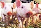 非洲猪瘟实时荧光定量RPA仪器(试剂)