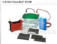 1703930 伯乐Bio-rad小型Trans-Blot 转印槽