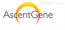 AscentGene授权代理