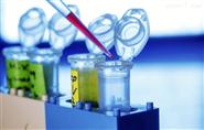 6T-CEM(人T细胞白血病细胞)