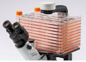 OLYMPUS奥林巴斯倒置生物显微镜CKX53培养容器