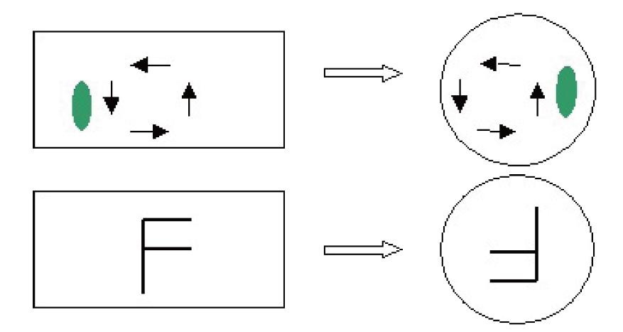技术中心 其他文章 正文    (7)普通光学显微镜下可以见到的细胞结构