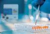 大鼠促卵泡素(FSH)ELISA 试剂盒