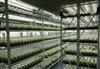 SP-ZPJ-3C植物组培架  光照培养架 育苗生长架